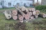 Pokácené stromy ve Vlastci.