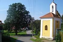 Strom na návsi v Borovanech.