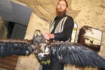 Uvedení orla mořského do expozice Prácheňského muzea v Písku.