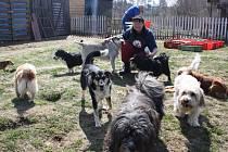 Ivana Gašpariková s několika psy, o které se stará.