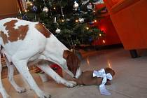 Vánoční nadílka v Křenovicích.
