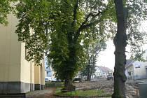Město pokácí dva stromy.