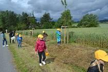 ZALÉVÁNÍ. Děti z Mateřské školy v Čížové se v pátek dopoledne postaraly o zalití stromů v krašovické aleji.