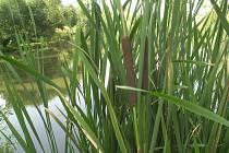 Takto by mohl vypadat břeh rybníků v Boudách.