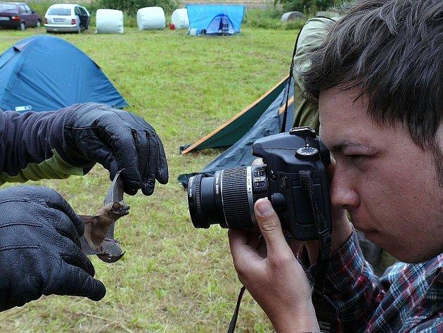 Fotografování netopýra.