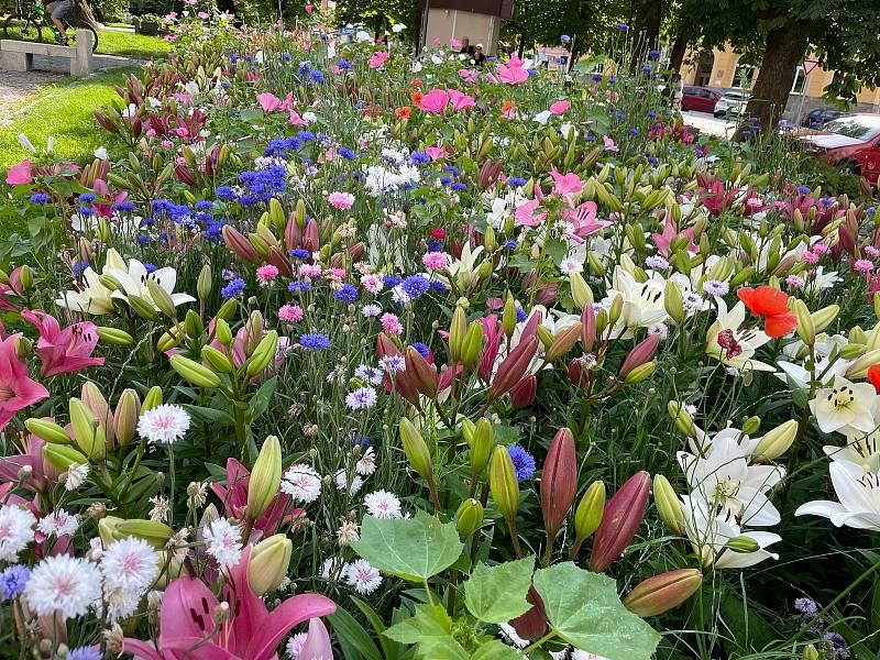 Po městě přibyly květinové ostrovy. Novinkou jsou i liliové záhony na Bakalářích.