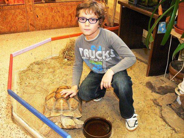 SPOLU SKARLEM. Tomáš Brůžek by se jednou chtěl stát ředitelem zoologické zahrady. Na snímku pózuje společně sKarlem, želvou ostruhatou, na ZOO kroužku DDM Písek.