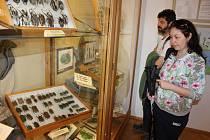 Výstava Příroda je mocná čarodějka v Milevském muzeu.