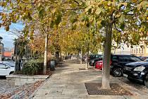 Stromy čeká úprava tvaru a omlazení.