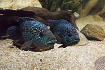 Živé ryby uvidíte v akváriu. Ilustrační foto.
