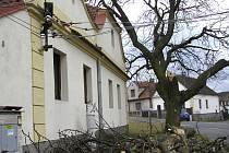 Odlomená větev letitého kaštanu na návsi ve Vráži způsobila výpadek elektřiny v celé obci na více než 24 hodin.