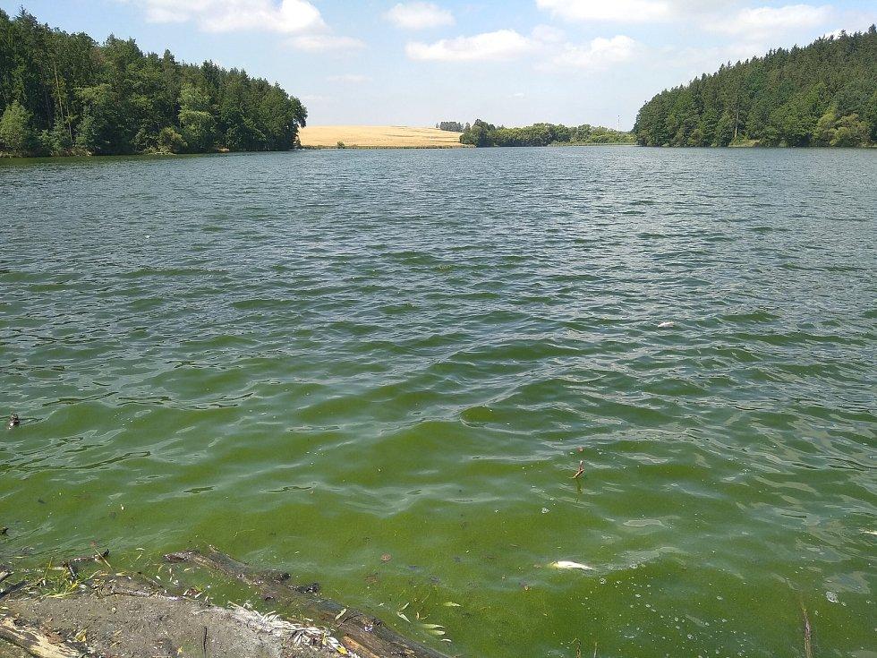 Rybník Tovaryš 16. července.