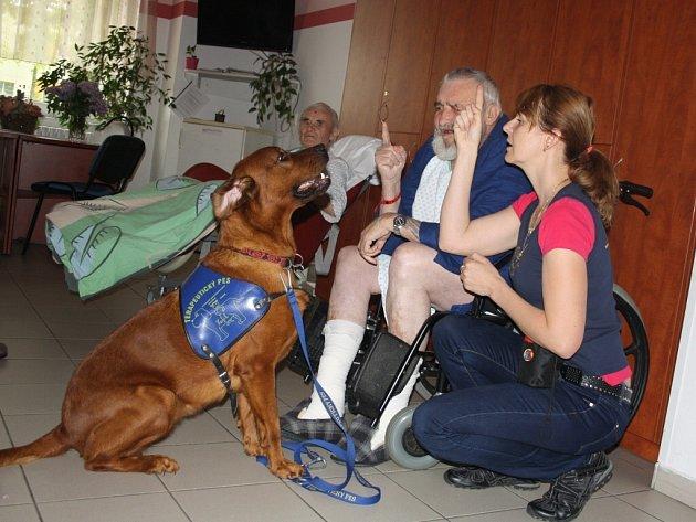 Petra Trojáková se svou fenkou Ellou dochází do písecké nemocnice od loňského podzimu. Na snímku jsou při léčbě s pacientem Karlem Pasauerem.