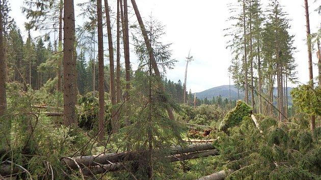 Padlé a nemocné stromy lákají kůrovce. Ilustrační foto.