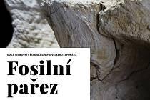 Prácheňské muzeum v Písku přichystalo exteriérovou výstavu. Uvidíte na ní zajímavý nález, kterým je fosilní pařez.