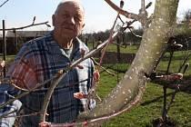 NA ZAHRADĚ. Důchodce Jaroslav Míka se pěstování jabloní věnuje mnoho desítek let.