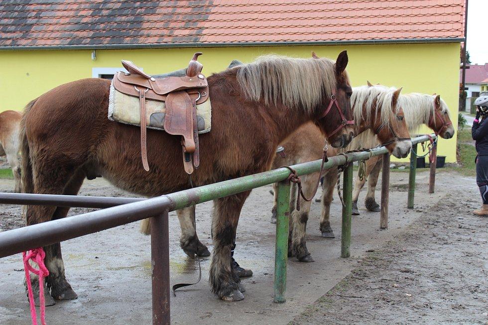 Tříkrálová sbírka ve Štěticích.