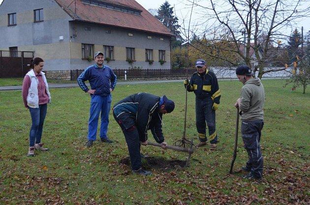 Sázení stromů v Třešni.
