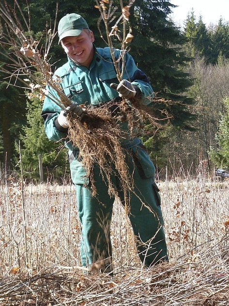 Studenti prvního ročníku Střední lesnické školy Bedřicha Schwarzenberga Písek pomáhají v těchto dnech v lesních školkách Lesů města Písku s přesunem mladých stromků do okolních lesů.