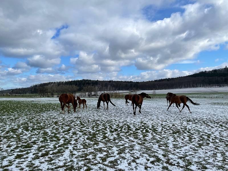 Koně na pastvinách v Novém Dvoře