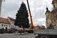 Přivezení a upevnění vánočního stromu v Písku.
