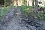 V lese mezi Protivínem a Zábořím pachatel zapálil BMW. Policisté zjišťují, kde se vůz před tím pohyboval.