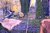 DŘEVO, DŘEVO A ZASE DŘEVO. Nejen pokácet a rozřezat, ale také uklidit a účelně zužitkovat ohromné množství dřeva.  To bude úkol pro pracovníky Městských  služeb.