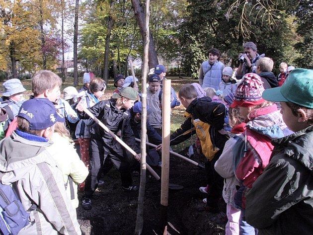 Při sázení dřezovce trojtrnného vydatně pomáhali také žáci z prvního stupně ZŠ Šobrova v Písku.