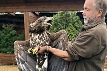 O orla  mořského se postarali v Záchranné stanici živočichů v Makově na Písecku.