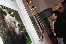VÝSTAVA. V prostorách Městské knihovny v Milevsku je do pátku 2. prosince k vidění výstava členů fotokroužku CvakyCvak. Na snímku si návštěvnice vernisáže prohlíží fotografie medvědů, jejichž autorem je Martin Himl.