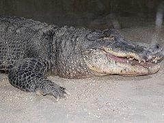 Krokodýlí zoologická zahrada v Protivíně.