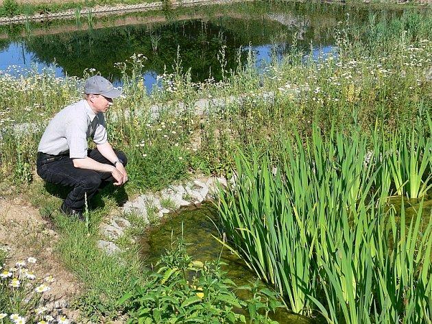 Kontrola.  Nejdůležitější pro požadovanou  účinnost kořenové čistírny odpadní vody je hlavně kvalita používaného  rákosového porostu. Tu na snímku kontroluje starosta Podolí I Vladislav Michal.