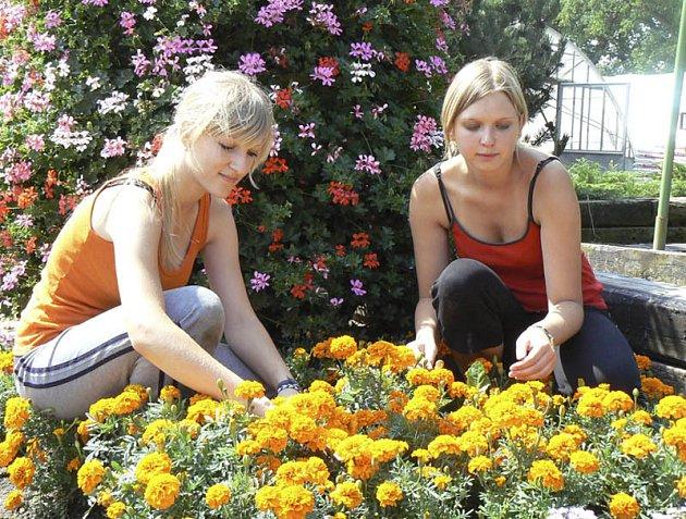 Před zahájením výstavy květin v Čimelicích, která dnes otevře své brány, brigádníce ještě kultivovaly záhony.