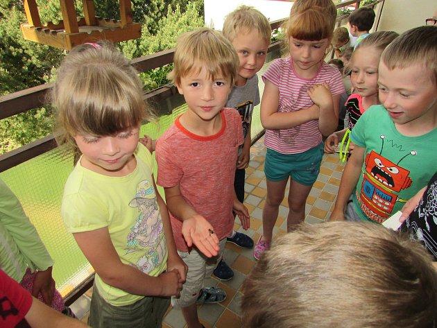 Děti se seznámily se životem včel.