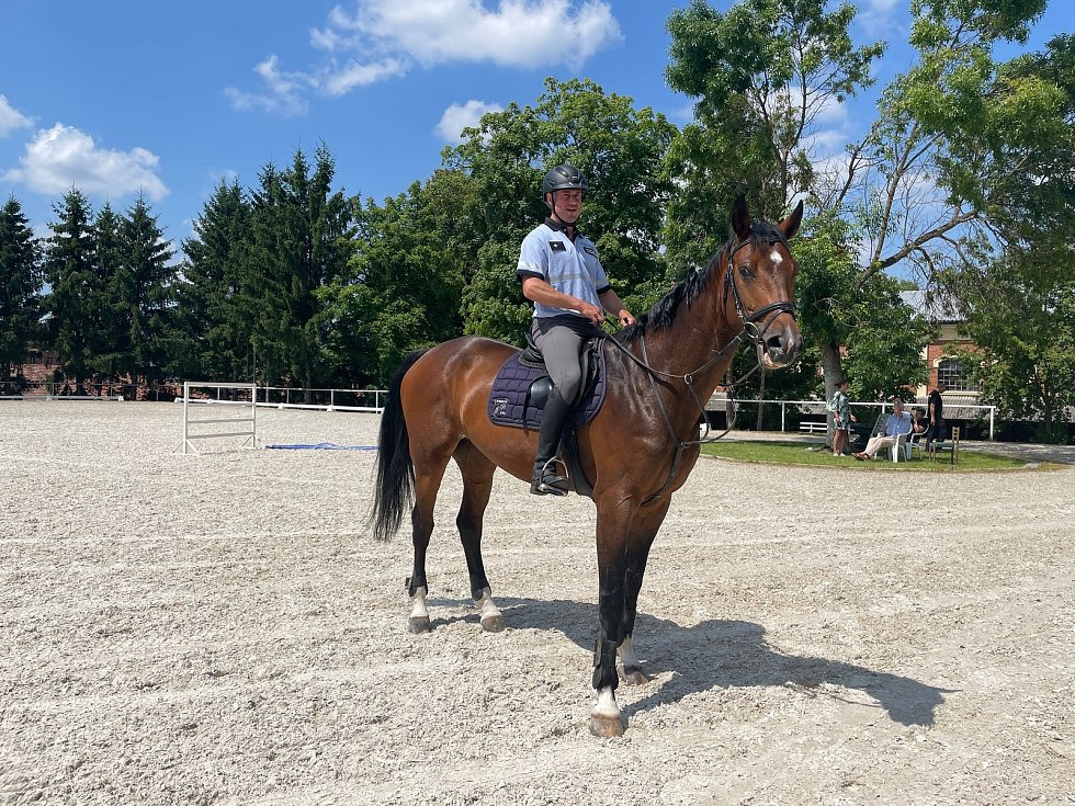 Výcvik koně pro službu u policie trvá přibližně rok a zahrnuje nejrůznější dovednosti.