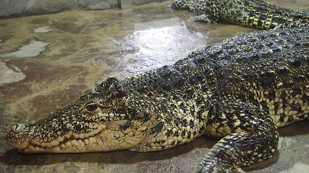 Krokodýlí zoo v Protivíně.