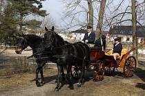 XIII. Jarní přehlídka plemenných koní v Zemském hřebčinci v Písku
