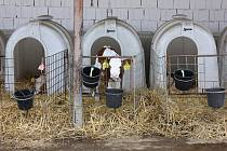 Otevření nové stáje v areálu farmy Jestřebice v Zemědělském družstvu Bernartice.