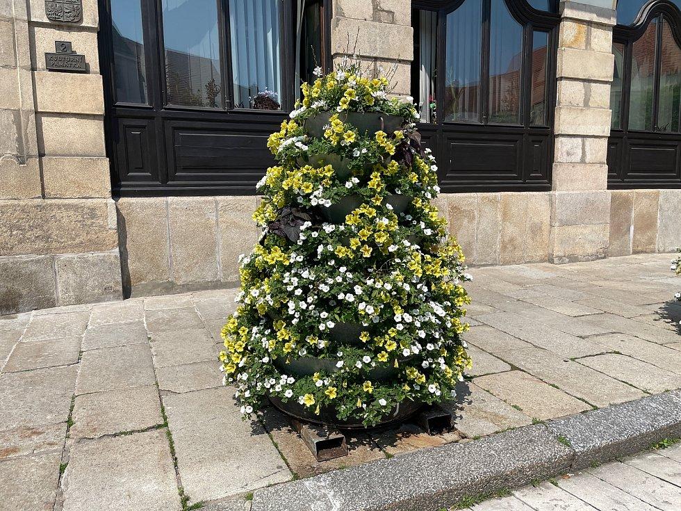 Květinové pyramidy před radnicí dělají radost kolemjdoucím.