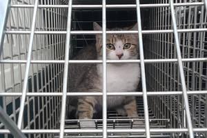 Toulavé kočky strážníci odchytávají do sklopných klecí, do kterých umístí návnadu.