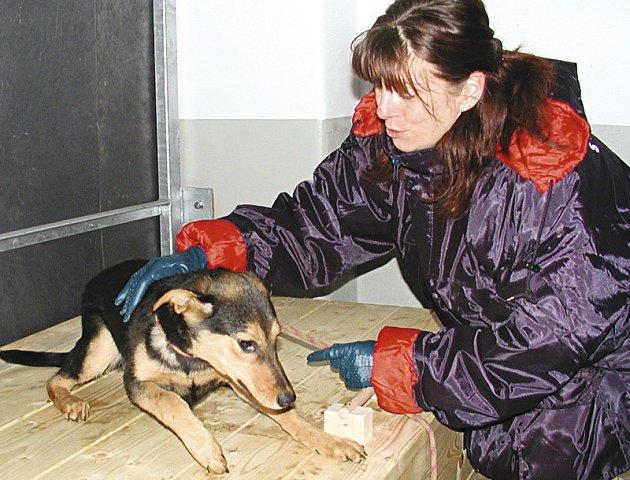 V ÚTULKU. Jak potvrdili  zástupci měst Písek a Strakonice i  návštěvníci, o opuštěná zvířata je ve strakonickém útulku dobře postaráno. Na snímku je  jedna z pracovnic Gabriela Březinová.