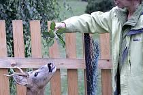 Návštěvnice z jižní Moravy obdivuje ochočeného srnce.