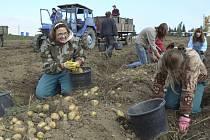 Studenti při sběru brambor