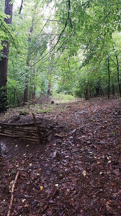 V lese na Americe byla nalezena mrtvá žena.