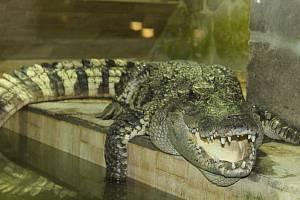 Protivín, Krokodýlí zoo. Ilustrační foto