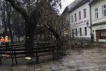 V důsledku orkánu Sabine se poroučel k zemi strom v Palackého sadech v Písku.