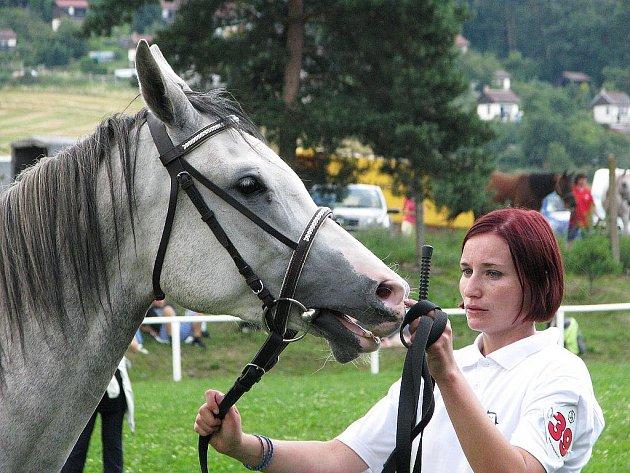 Celostátní přehlídka koní plemene Shagya-arab v píseckém hřebčinci.