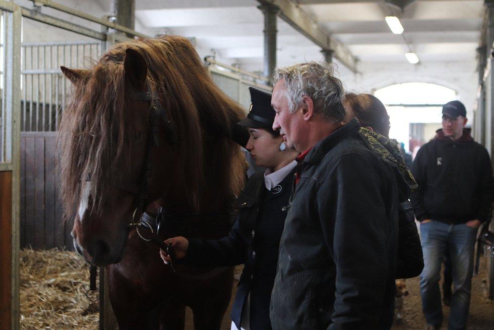 Jarní přehlídka plemenných koní v Zemském hřebčinci v Písku