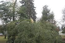Stromy v milevském parku.