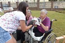 Klienty seniorského centra pobavili králíci.